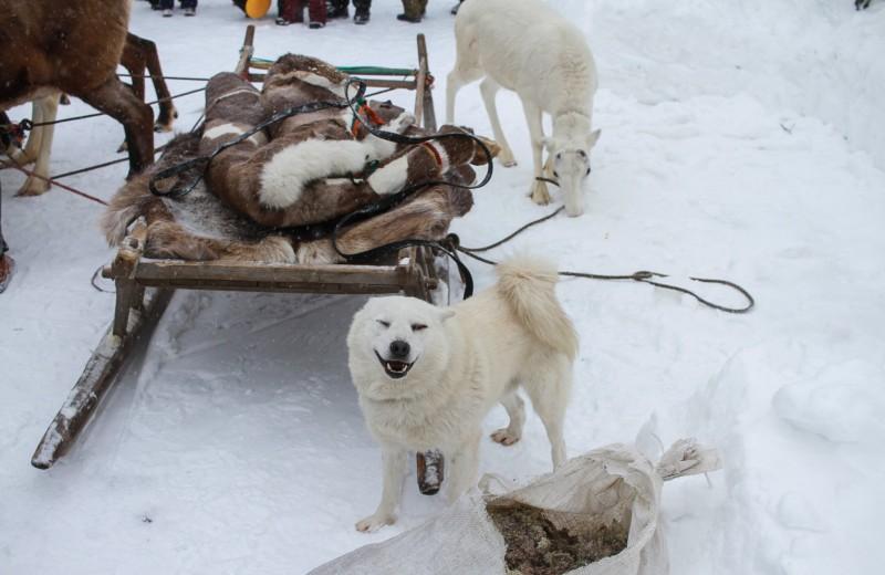 В какой степени гены определяют поведение породистых собак?