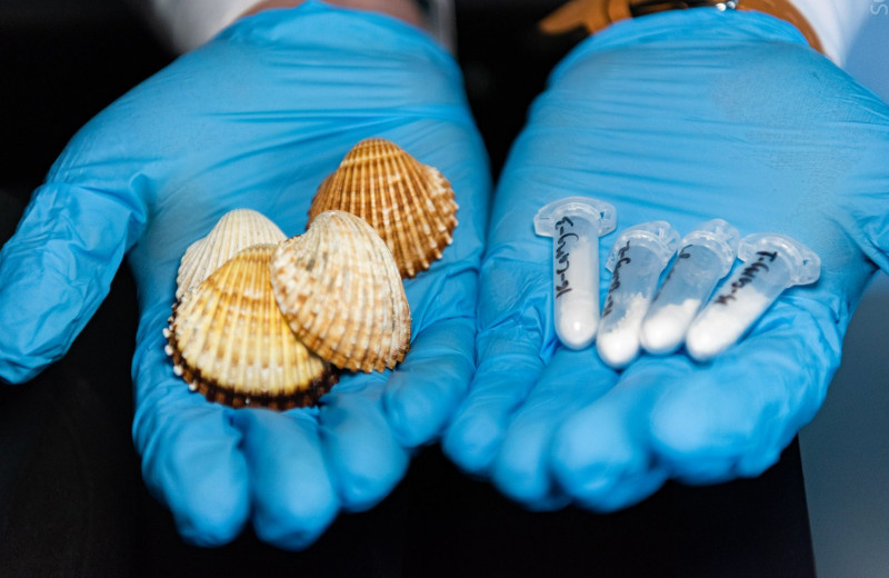 Ракушки помогут хирургам: из биоотходов создали материал для операций