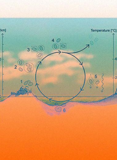 Ученые предложили сценарий существования жизни в облаках Венеры