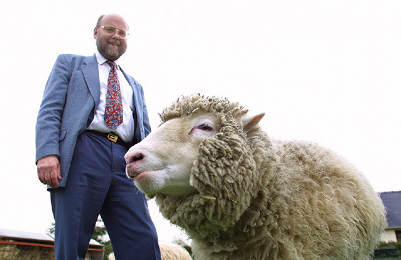Юбилей овечки Долли. Когда же, наконец, клонируют человека?