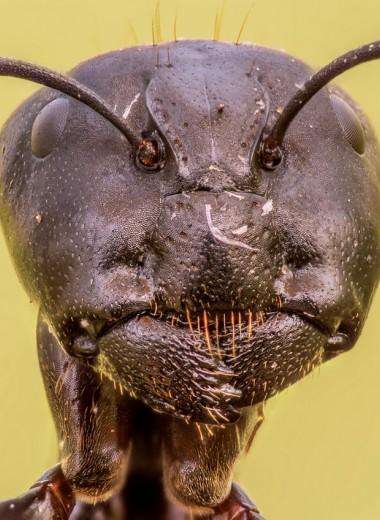 Эффект плацдарма: как муравьи захватили мир