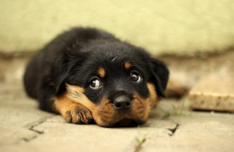 Прирожденные психологи: новое открытие о собаках