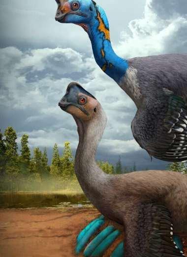 Уникальную окаменелость динозавра нашли над кладкой яиц