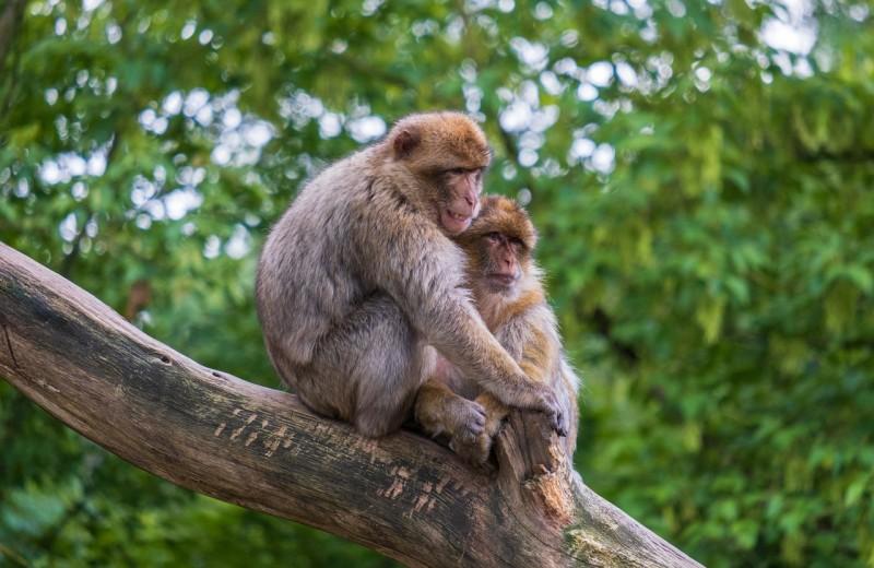 4 октября – Всемирный день защиты животных