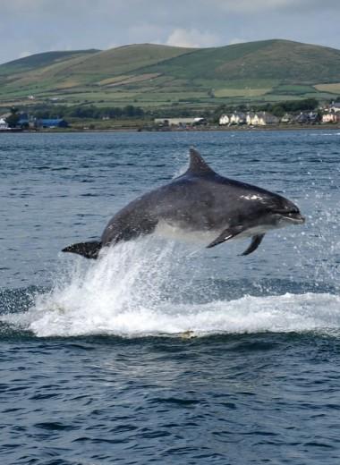 Фанджи: самый старый дельфин-одиночка