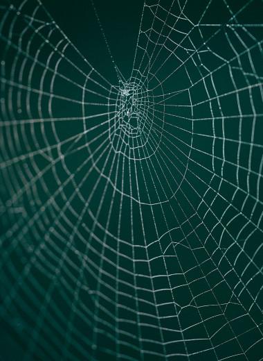 Ловчую сеть паука превратили в синтезатор