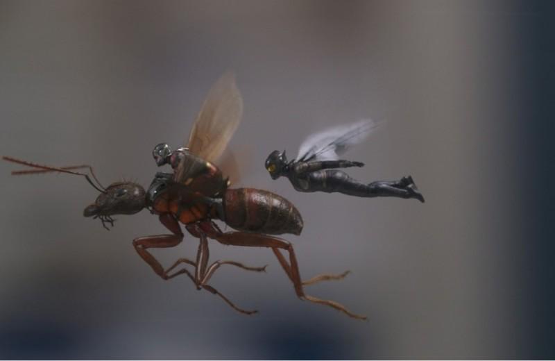 «Человек-муравей и Оса»: реабилитация смехом после суровых «Мстителей»