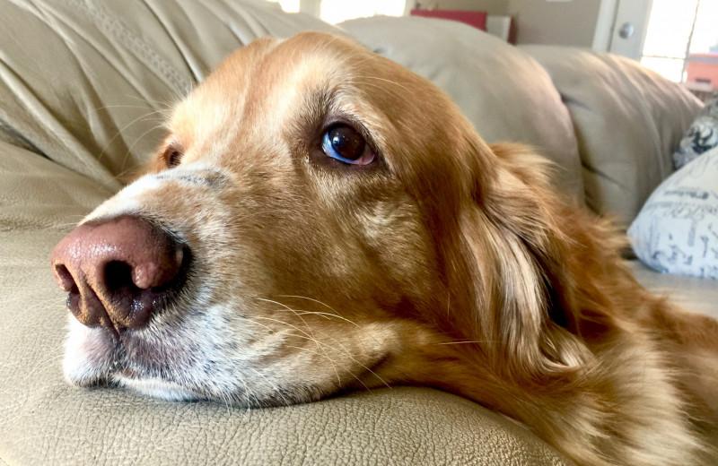 7 признаков, что у твоей собаки серьезный стресс, и что можно с этим сделать