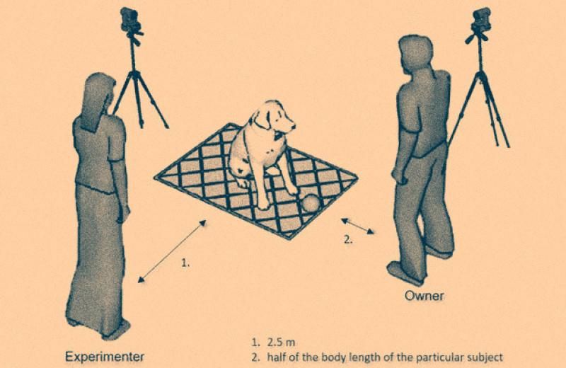 Собаки прошли тест на осознание границ своего тела