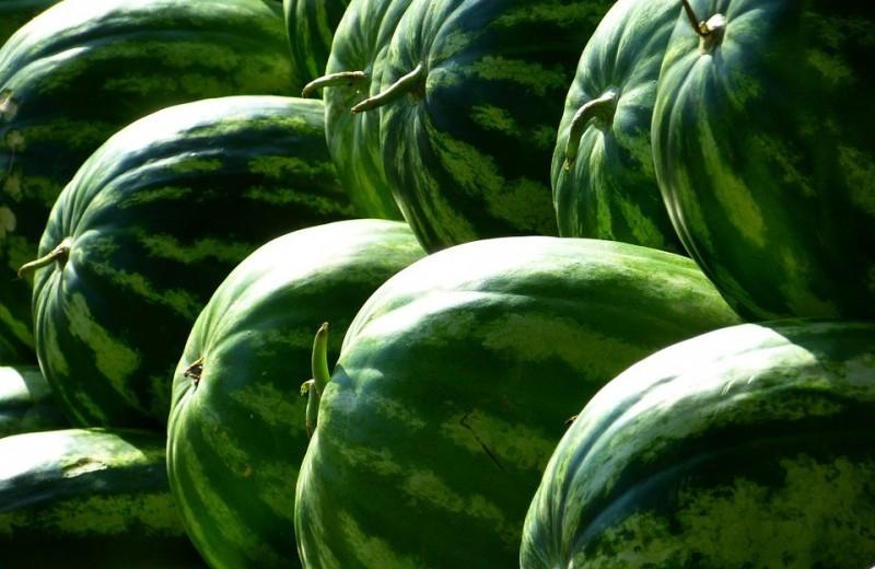 Как выбрать спелый арбуз? 11 проверенных методов, которые надо запомнить