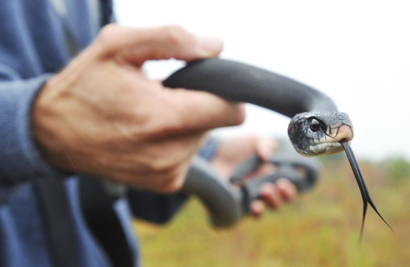 Работа убивает: 5 герпетологов, которые не пережили укус змеи