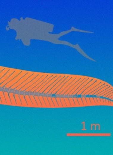 Среди динозавров наконец-то отыскали хороших пловцов