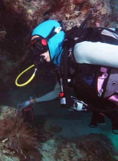 Рифовых рыб хотят использовать для контроля популяции морских звезд, поедающих кораллы: видео