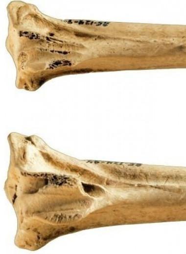 Какими были древнейшие инструменты для татуировок из птичьих костей