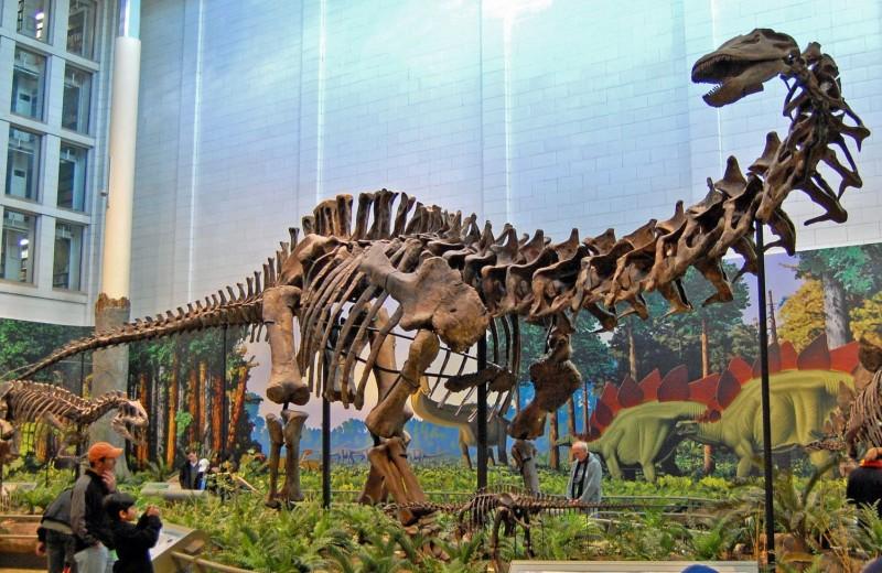 В Бурятии нашли останки гигантского динозавра