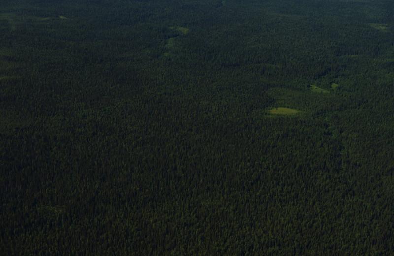 WWF России представляет фильм-экспедицию по первозданным лесам Архангельской области