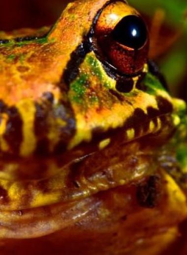 В Андах нашли 20 новых видов животных и растений