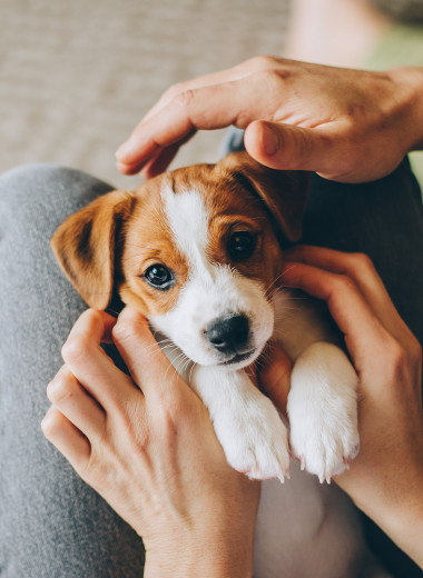Как понять, сколько проживёт собака, и можно ли на это повлиять