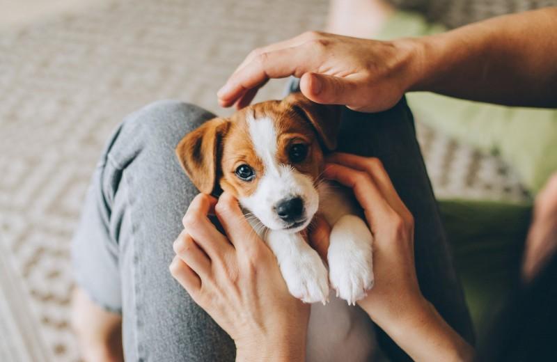 Вредные советы: как не вырастить здоровую и счастливую собаку?