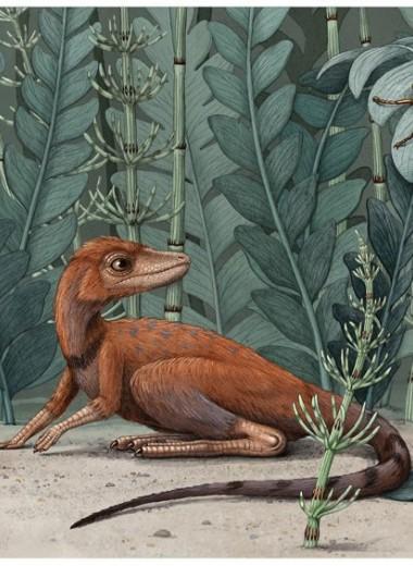 На Мадагаскаре обнаружен миниатюрный предок динозавров