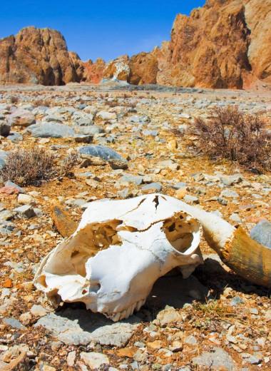 Биолог — об исчезающих видах, экоциде и предсказании эпидемий