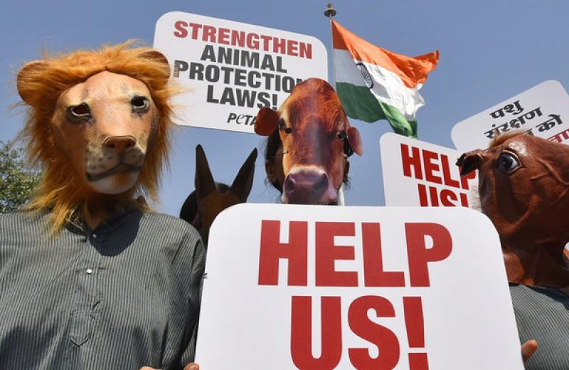 """Зоозащитники из PETA призвали отказаться от """"жестоких"""" поговорок про животных"""