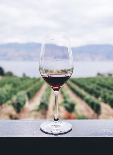 Как правильно подавать вино