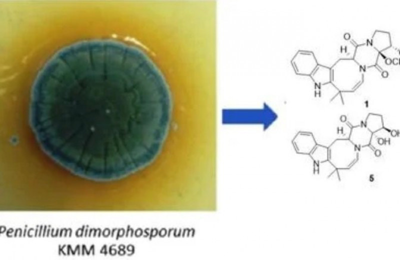 Российские ученые нашли в морской плесени противоядие от высокотоксичного гербицида