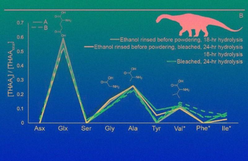 Палеонтологи нашли в яйцах титанозавра аминокислоты вместо пептидов