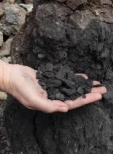 В Сибири нашли еще одну причину самого масштабного вымирания в истории Земли
