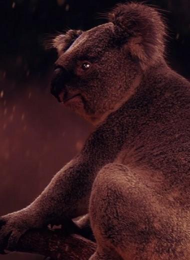 113 видов животных находятся под угрозой исчезновения из-за пожаров в Австралии