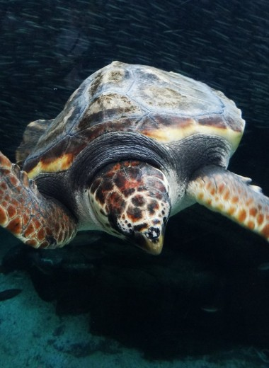 Ученые открыли густонаселенные миры на спинах черепах