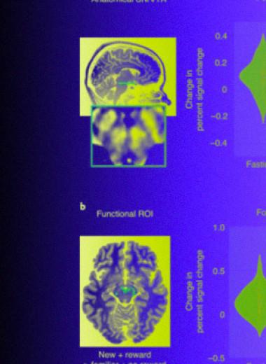 Система вознаграждения среднего мозга не увидела разницы между голодом и социальной изоляцией