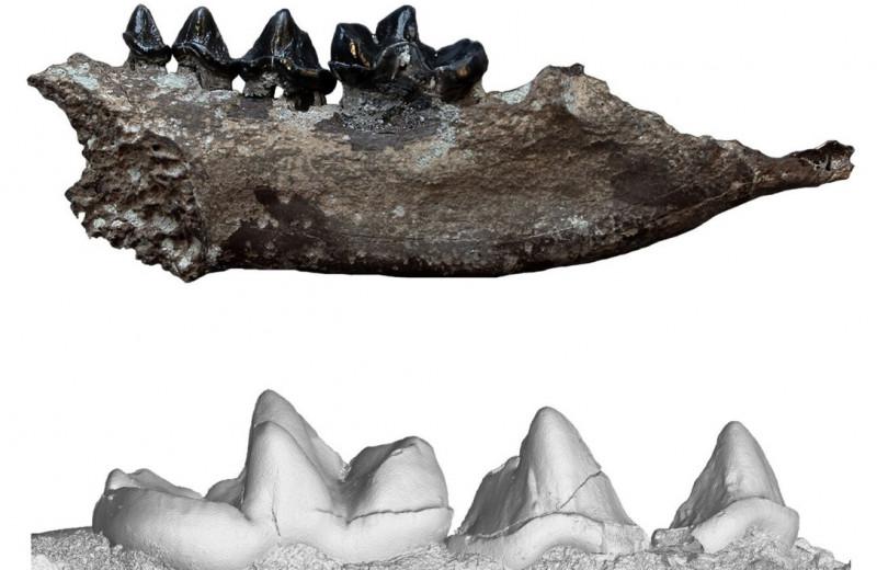 В Германии нашли ископаемую выдру нового вида