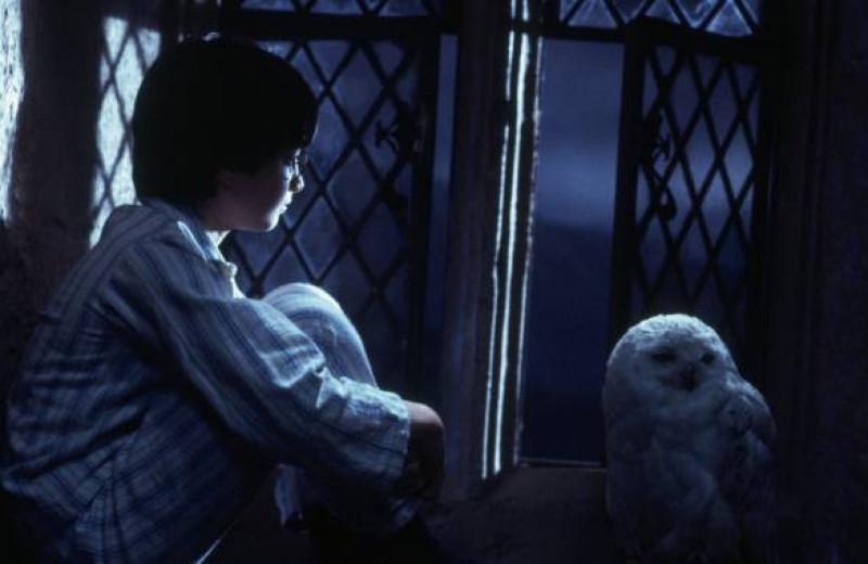 Нелюбимые дети и плохие учителя: герои «Гарри Поттера» на приеме у психотерапевта
