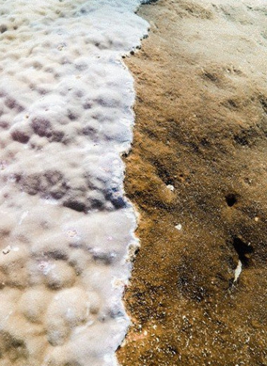 В Австралии нашли редкий гигантский коралл. Ему более 400 лет!