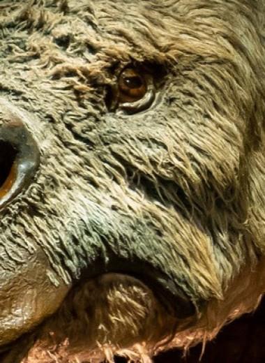 В вымирании австралийской мегафауны обвинили климатические изменения