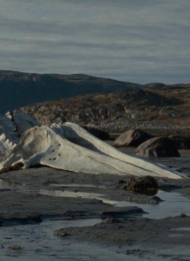 Как создавалась сцена со скелетом кита в фильме Андрея Звягинцева: фрагмент книги «Левиафан: разбор по косточкам»