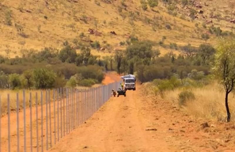 Самый длинный в мире забор против кошек построен в Австралии