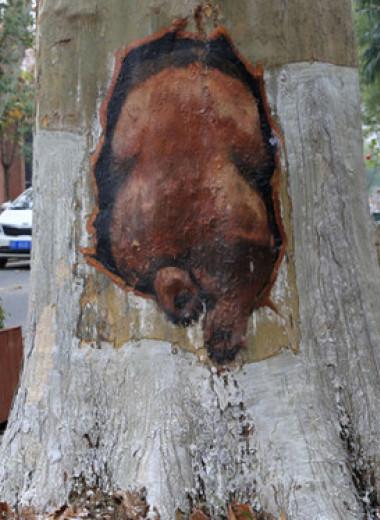 Кто и зачем рисует картины на деревьях?