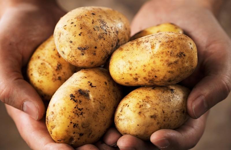10 примеров ядовитой еды, которой мы не прочь перекусить