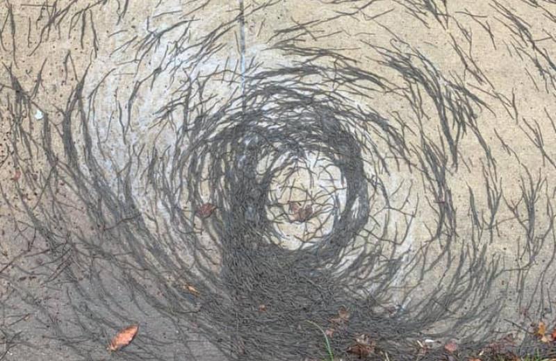«Червихрь»: странное поведение дождевых червей