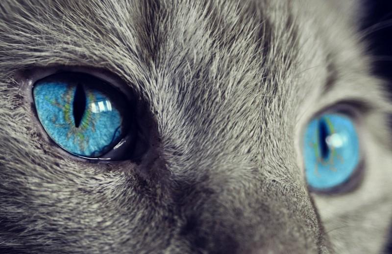 Как кошки осваивают профессии: почтальон, астронавт, библиотекарь
