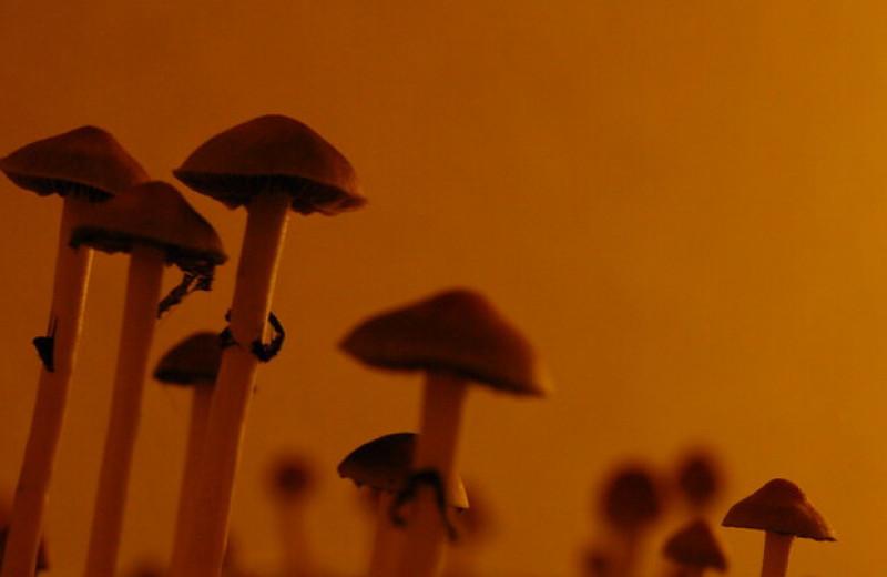 Прием псилоцибина связали со снижением креативных способностей