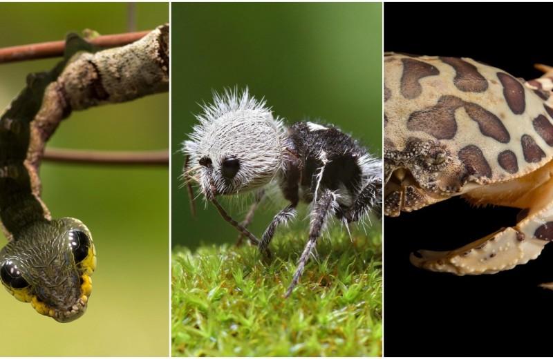 Животные-оборотни: 6 существ, которые украли чужую внешность