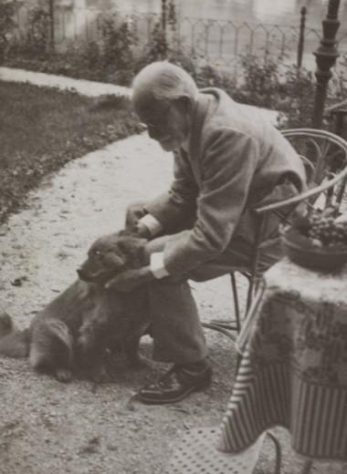 Волк, Красота и другие собаки Зигмунда Фрейда