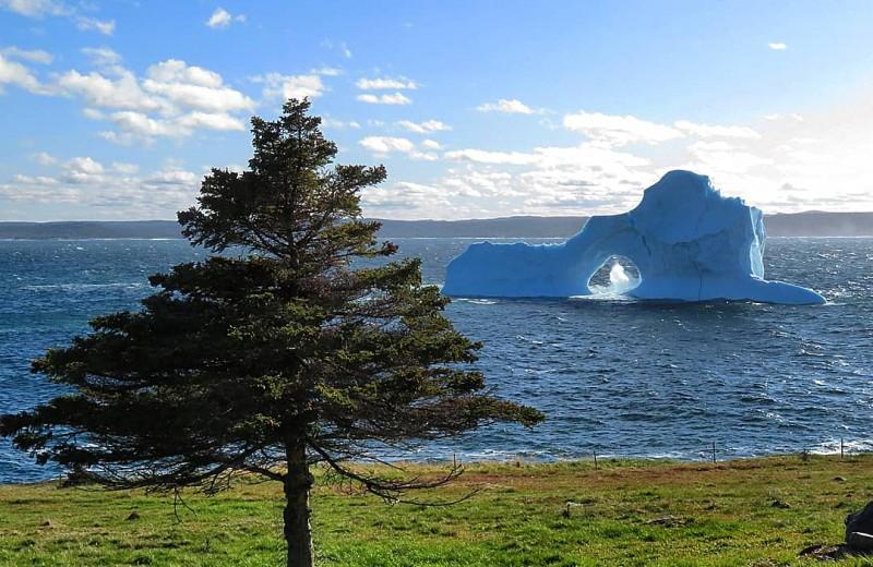 Необычный айсберг приплыл в Канаду