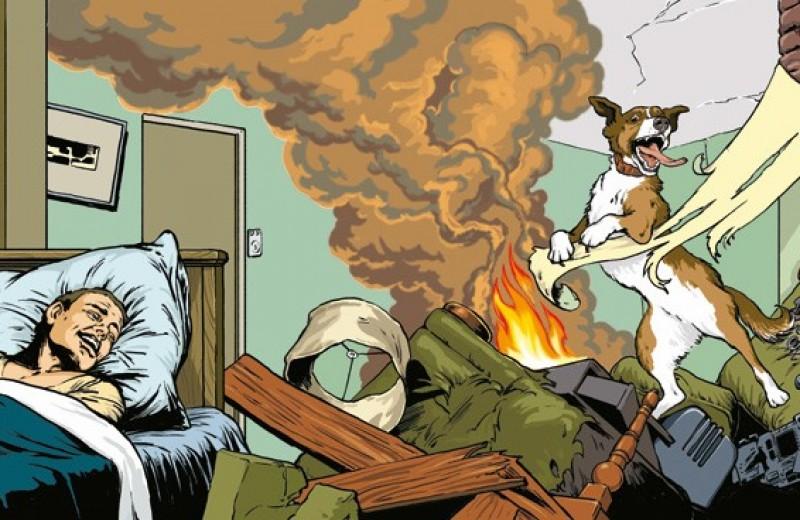 Лучший враг человека. 9 неприятных историй, связанных с милыми собаками