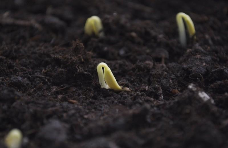 Семена, пролежавшие 30 лет в вечной мерзлоте, удалось прорастить