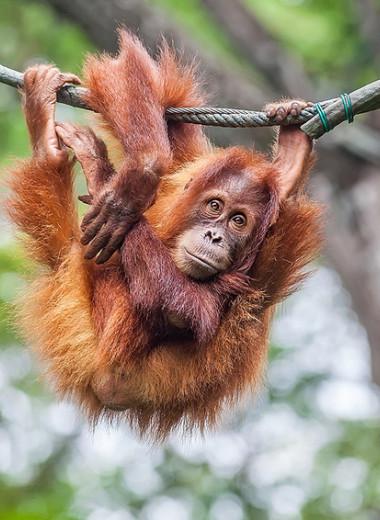 Внутренняя обезьяна: как люди научились у животных показывать свою власть